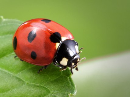 ladybug-spirit-animal.jpg