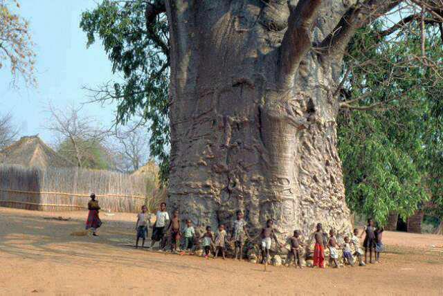 2000 baoba